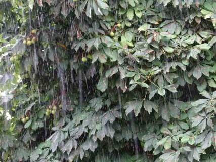 Pluie excessive :  les conseils de jardinage
