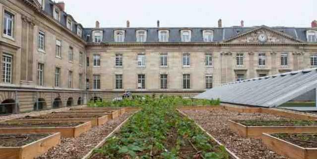 Vigne et potager... La nature s'invite sur le toit de l'Hôtel-de-Ville de Paris
