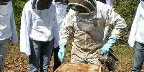 Déjà 105 104 000 abeilles parrainées, pourquoi pas vous ?