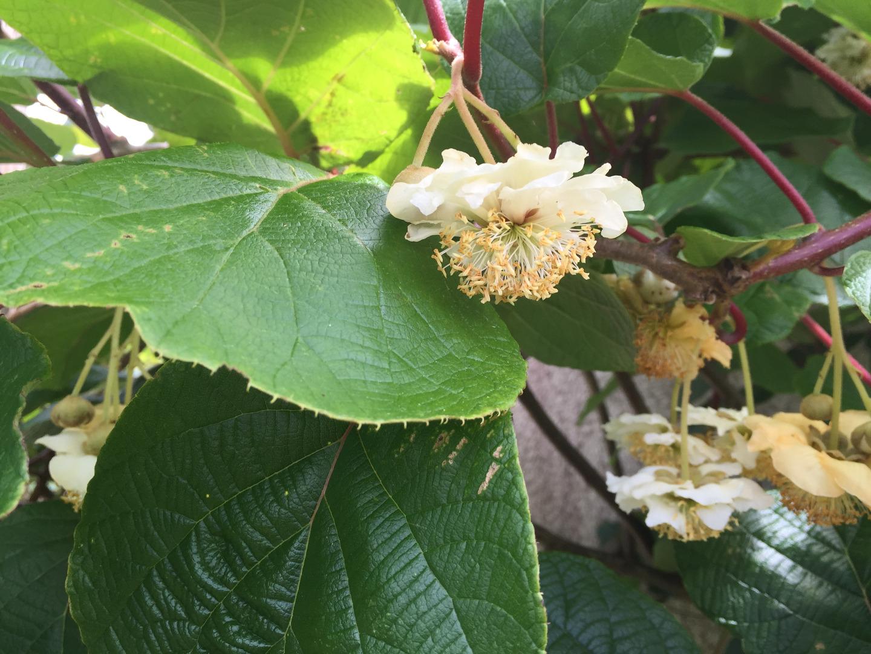 Les rosiers de mon jardin beaux jardins et potagers for Le jardin de catherine com