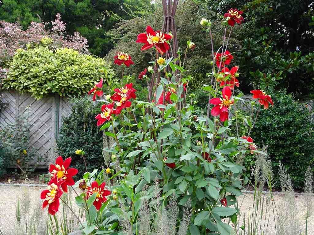 Collection de dahlias au jardin des plantes beaux jardins for Au jardin des plantes