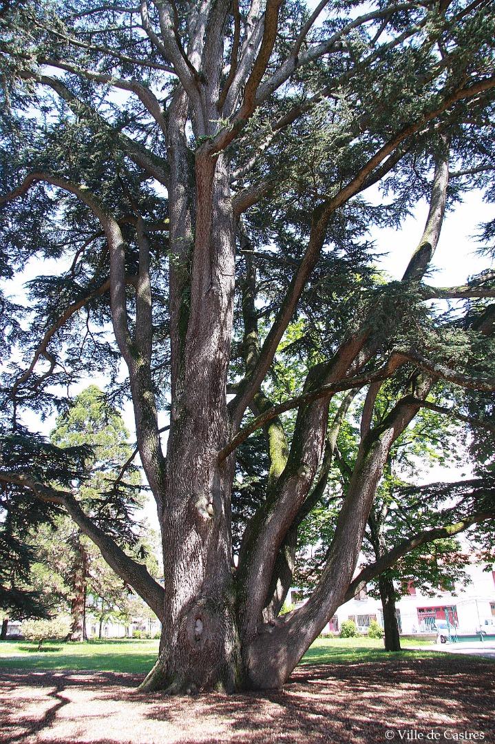 Jardin Briguiboul