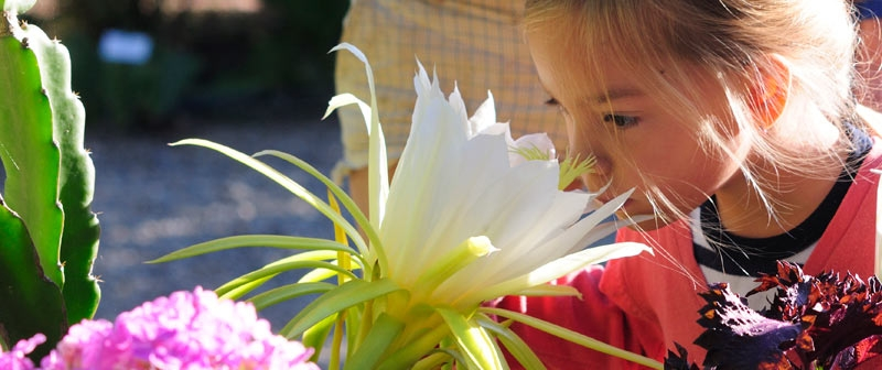 Visite du jardin aux plantes parfumées