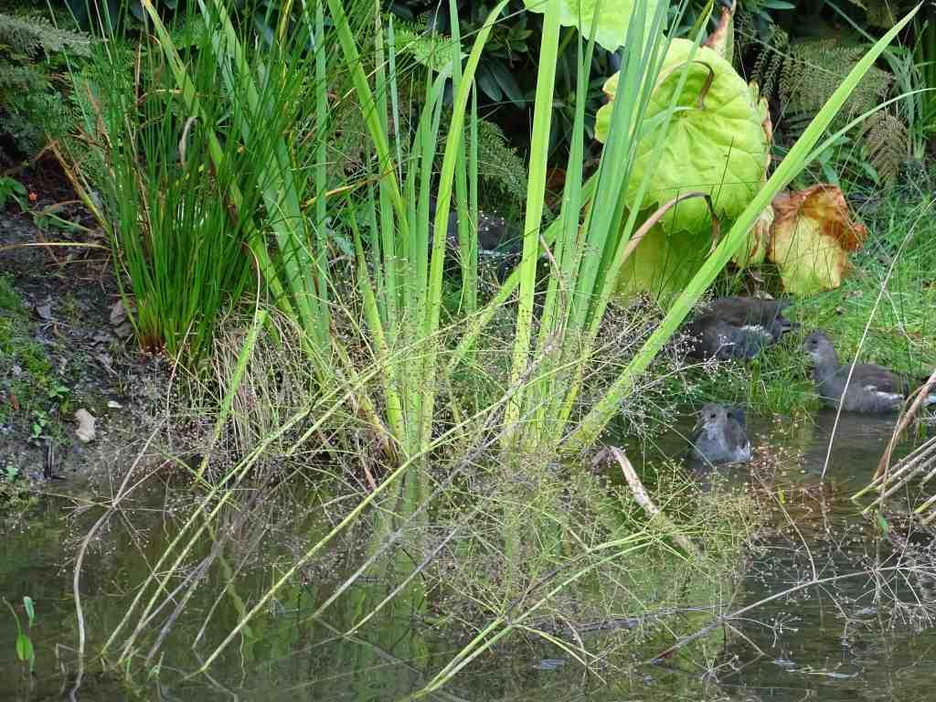 Les petits compagnons du jardin des plantes beaux jardins for Boulevard du jardin botanique 20 22